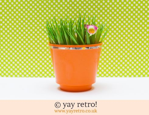 0: Orange Plastic Plant Pot (£4.50)