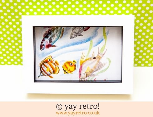 0: Vintage Fish Framed (£6.50)